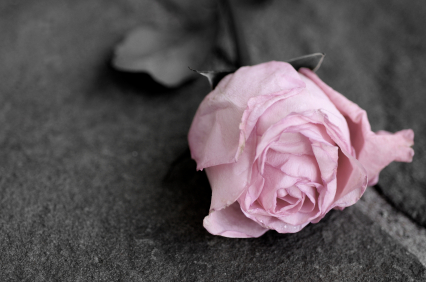 owned pink rose